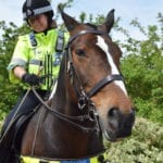 Mounted police on horse